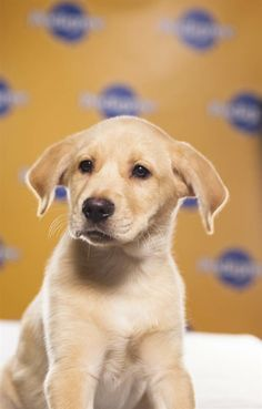 Meet the 2013 Puppy Bowl lineup - Slideshows and Picture Stories - NBCNews.com