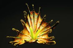 Dale Chihuly Art Glass (Source: Ed Goodfellow Web Images)