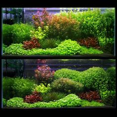 Post with 0 votes and 235 views. One of my underwater creations Aquascaping, Aquarium Aquascape, Planted Aquarium, Aquarium Garden, Tropical Fish Aquarium, Aquarium Design, Freshwater Aquarium Plants, Cool Fish Tanks, Fish Home