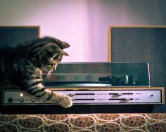 National Cat Day: readers' pictures | Life and style | The Guardian