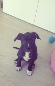 sweetest puppy i´ve ever seen !!!! <3 coco <3