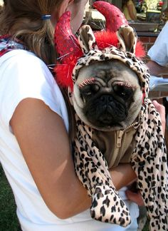 Pug with fake lashes haha