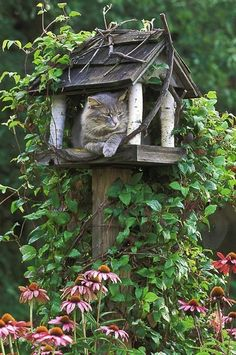 garden structure ~ kitty condo..... This is adorable!!  (pretty sure it actually used to be a bird feeder, until someone....  um....ate the guests)