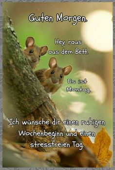 Luftwaffe, Good Morning, Animals, Petra, Advent, Quotes, Good Nite Images, Morning Sayings, Buen Dia