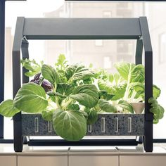 Ikea introduce a hydroponic indoor gardening kit ikea launches hydroponic indoor gardening kit workwithnaturefo
