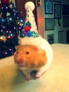 Holiday Hampster