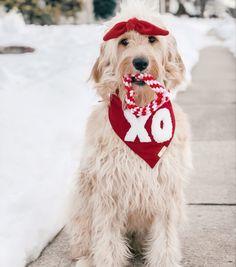 The deluxe pup   Dog bandana   valentines day dog bandana   dog wearing bandana   bandana aesthetic   goldendoodle bandana   xo dog bandana New Product, Product Launch, Valentines Day Dog, Goldendoodle, Dog Bandana, Dog Accessories, Hand Stitching, Pup, Pretty