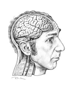A drawing of Will Self's massive brain