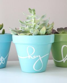 Learn how to paint terra cotta pots with adorable stencil DIY sentiments. Perfect for succulent craft ideas and more.