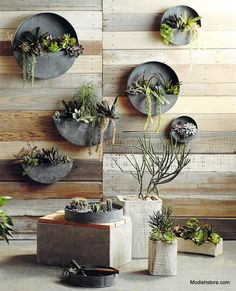 Roost Rustico Planters are carved whole from single piece of Kiri wood. The exotic and rustic planters have a soft white wash finish. The rectangular shape gives them