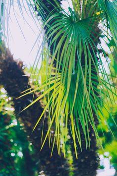 Shine your Light Shine Your Light, Plant Leaves, Child, Nature, Flowers, Plants, Boys, Naturaleza, Kid