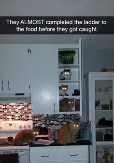 50+ Hilarious Cat Snapchats That You Need To See Right Now