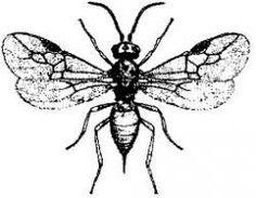 El insecto alado más pequeño del mundo, la avispa parasitaria de Tanzania, es más pequeño que el ojo de una mosca común.