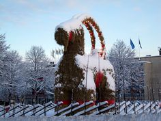 Christmas Traditions: the Swedish Christmas tale is that the tomte (Sweedish Santa) rides a Julbock, or Christmas Goat, instead of a sleigh. The town of Gävle erects an enormous goat every year, such as the one from 2009 in the picture. Swede families usually have a straw Julbock under their Christmas trees or a small one on the tree. It's believed that these small Christmas Goats were once made from the last shafts of the harvest crop and symbolized the power of rejuvenation and fertility