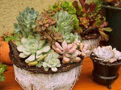 Succulents planted in basket. LaurasLittleGardens.com