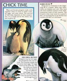 Penguin Facts | Penguin Place Penguin Facts, Pandas Playing, Waterproof Coat, Down Feather, Antarctica, Penguins, Cute Animals, Biology, Classroom Ideas
