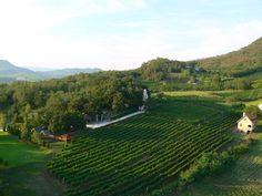 Istvandy Estate, #badacsony, #istvandy, #wine