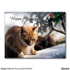 Ginger Cats Postcard