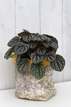 How to make gorgeous DIY plant pot covers out of old road maps. Map Crafts, Cute Crafts, Diy Craft Projects, Craft Tutorials, Plastic Bottle Planter, Paper Bag Crafts, Sticky Back Plastic, Paper Plants, Paper Vase