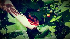 Fraises des bois  #nature #fraisesdesbois