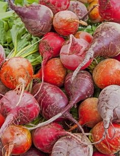 Beets: Answers to Frequently Asked Questions About Growing Beets, Storing Beets, and Cooking with Beets, Article on www.MetaphoricalPlatypus.com, Image by Rosemary Ratcliff, FreeDigitalPhotos.net #beets #vegetables #food #growingfood #growingvegetables #growingbeets #howtogrowbeets #vegetablegarden #vegetablegardening