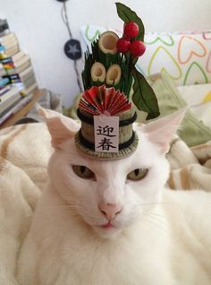 I'm ready for the Festival of Cats