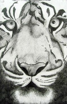 Realistic Animal Portraits in Graphite - Conway High School Art Project