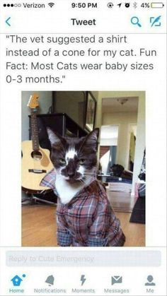 30 Funny Memes Compilation of this Month 30 Funny Memes Compilation of this MonthWe will post every month's best funny Memes compilation. Here is the 30 Funny Memes compilation of t Cute Funny Animals, Funny Cute, Cute Cats, Cat Fun, Funny Animal Pictures, Best Funny Pictures, Hilarious Pictures, Funny Photos, Tier Fotos