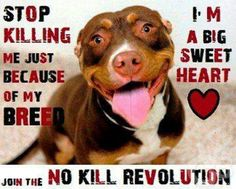 Stop killing wecare sick tired of you killing are breed off we are playing so stop never single one breed out. Never trash breed so damn bad that nobody would want them at all im pit bull terrier lover always I am animal lover I will never kill or abuse or been to any breeds once you go pit you sure won't never quit Gotta love a pittie smile!!