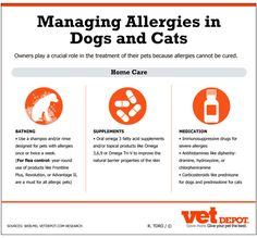Managing Allergies in Dogs and Cats Infographic