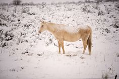 Horse in snow 2 Event Photography, Senior Photography, Children Photography, Newborn Photography, Family Photography, Amazing Photography, Horses In Snow, Facebook, Winter
