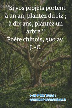 """""""Si vos projets portent à un an, plantez du riz ; à dix ans, plantez un arbre."""" Poète chinois, 500 av. J.-C. Phrases, Info, Positive Quotes, Positivity, Inspire, Nature, So True, Citation Vie, Proverbs"""