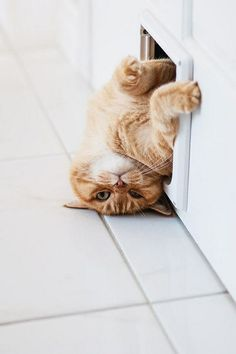 Very interesting post: TOP 82 Funny Cats and Kittens Pictures.сom lot of interesting things on Funny Animals, Funny Cat. Baby Animals Pictures, Cute Baby Animals, Funny Animals, Funniest Animals, Funny Horses, I Love Cats, Crazy Cats, Cool Cats, Cute Kittens