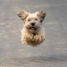 puppy torpedo