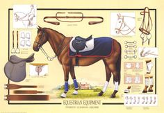 Horse Equestrian Equipment Art Print - Poster and Print Horse Stables, Horse Tack, Safari, Horse Grooming, Horse Gear, Saddle Pads, Equestrian Style, Horse Riding, Four Legged