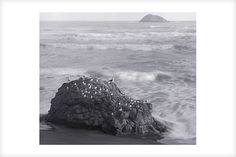 """""""Muriwai Rock and Gulls"""" is a fine art photograph by Jonathan Bourla.  Taken with a large format view camera similar to the plate cameras of one hundred years ago.  This limited edition photograph is printed on one hundred percent acid-free cotton rag paper with pigment ink.  To see more of Jonathan's photographs, go to www.jonathanbourla.com"""