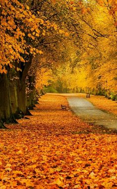Still in a mood to write a love story where a elderly couple meet in the park to talk.- autumn