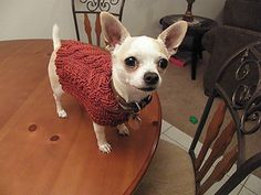 Ravelry: Cable Sweater for Ollie pattern by Kimberly Vogel Knitted Dog Sweater Pattern, Dog Coat Pattern, Knit Dog Sweater, Cable Sweater, Cable Knit, Pet Sweaters, Small Dog Sweaters, Small Dog Coats, Pet Coats