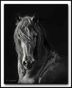 Windblown - Scratchboard Friesian Horse