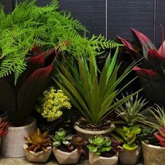Faux Fabulous Featuring a selection of faux foliage and cactus plants  available at Sue Parkinson 86b1a76be1