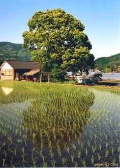 日本の田舎 - Japan's rural landscape is not a tourist destination Shooting location is the outskirts of Kochi Prefecture Kami.