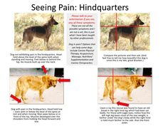Seeing Pain: Hindquarters