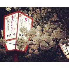Kyoto sakura glows white in the lantern's halo. Hanami at its finest.  QuynhAnh Nguyen @Queenanie Nguyen Nguyen Nguyen Instagram photos