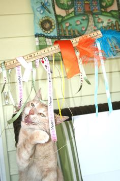 Teen made cat toy using ribbon