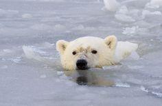 Done the polar bear swim LOTS of times!