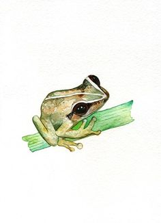 Coqui Cutie / Coqui frog /  puerto rican coqui frog / green /Watercolor Print/ 8.5x11