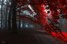 -The road of seraphines- by Janek-Sedlar on DeviantArt