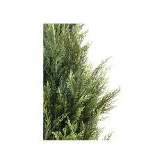 Plus de 1000 id es propos de cypres sur pinterest florence bonsa et totems - Cypres de florence totem ...