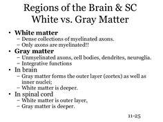 150 ch11 neurology