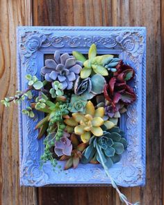 This listing is for one picture framed vertical garden. Approximate Size: 9 x 7 Color : Periwinkle Makes an excellent gift! (Just add the Succulent Frame, Vertical Succulent Gardens, Succulent Gardening, Succulent Arrangements, Succulent Terrarium, Container Gardening, Succulent Ideas, Terrariums, Herbs Garden